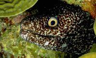 Sea Eels