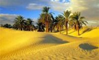 desert and oasis of egypt