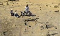 Egypt discovers 3500 year-old oasis trading post.